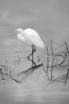 Egret Reflected Mono