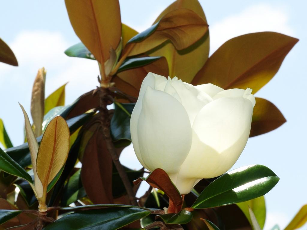 Birds & Blooms Suscripción a revistas | Renovaciones | Regalos
